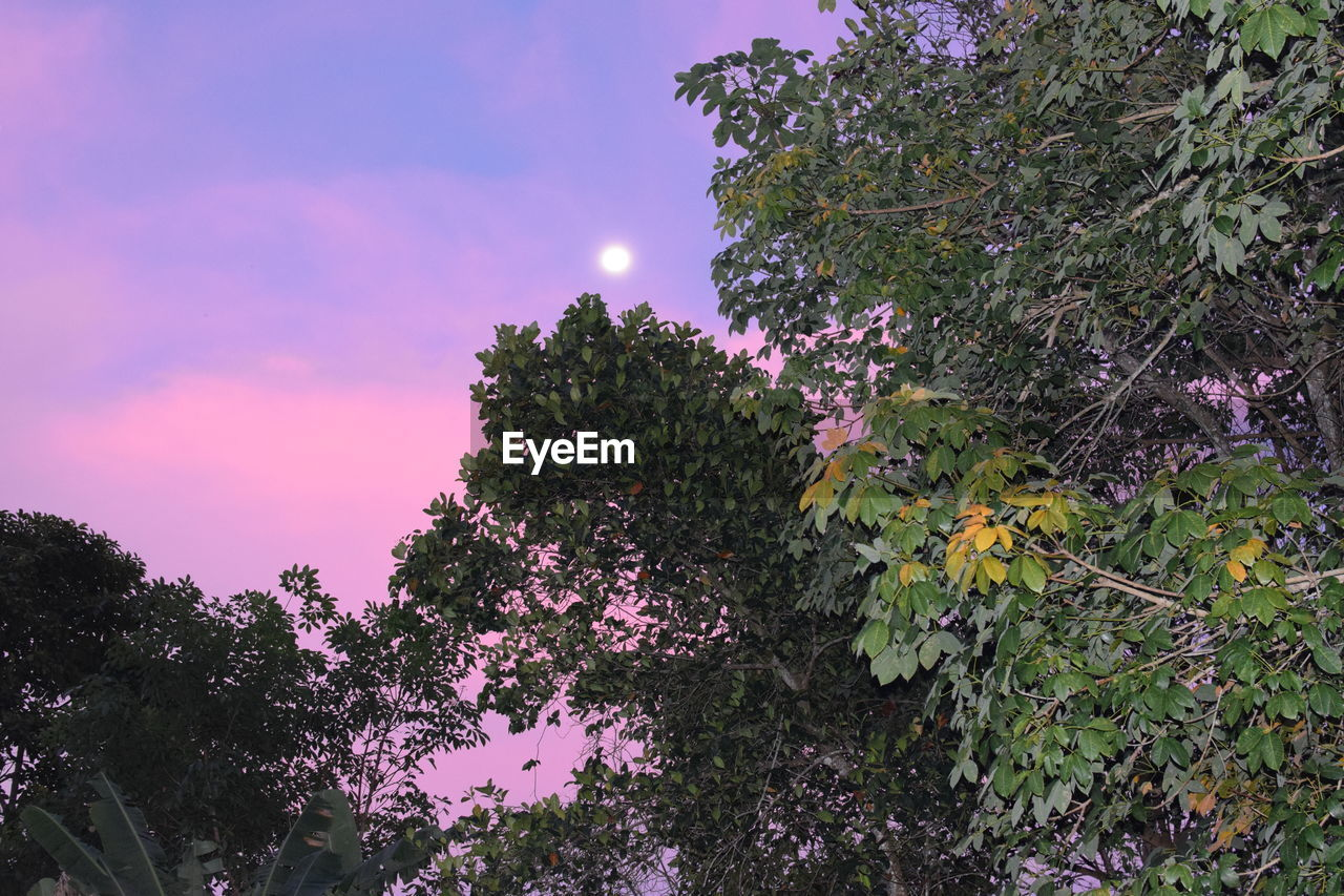 growth, nature, beauty in nature, tree, low angle view, no people, outdoors, plant, tranquility, sky, scenics, day, freshness, close-up