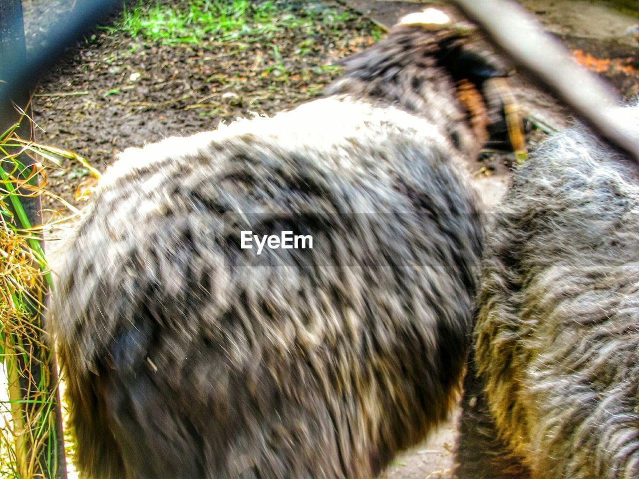 animal themes, animal, one animal, vertebrate, mammal, animal wildlife, blurred motion, day, land, nature, pets, domestic, domestic animals, motion, selective focus, close-up, no people, field, animals in the wild, animal head