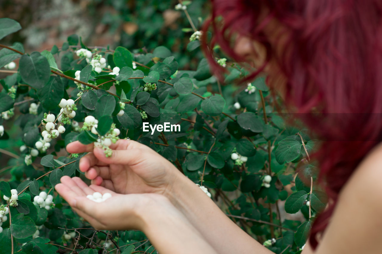 Cropped Image Of Woman Picking Flower Buds In Park