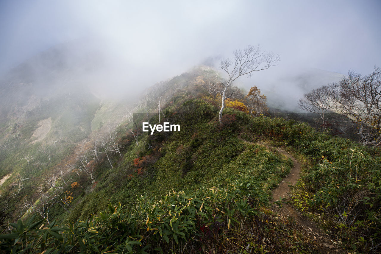 fog, mountain, tranquil scene, environment, scenics - nature, tranquility, plant, beauty in nature, nature, landscape, tree, land, sky, day, non-urban scene, no people, idyllic, outdoors, growth, mountain peak, hazy