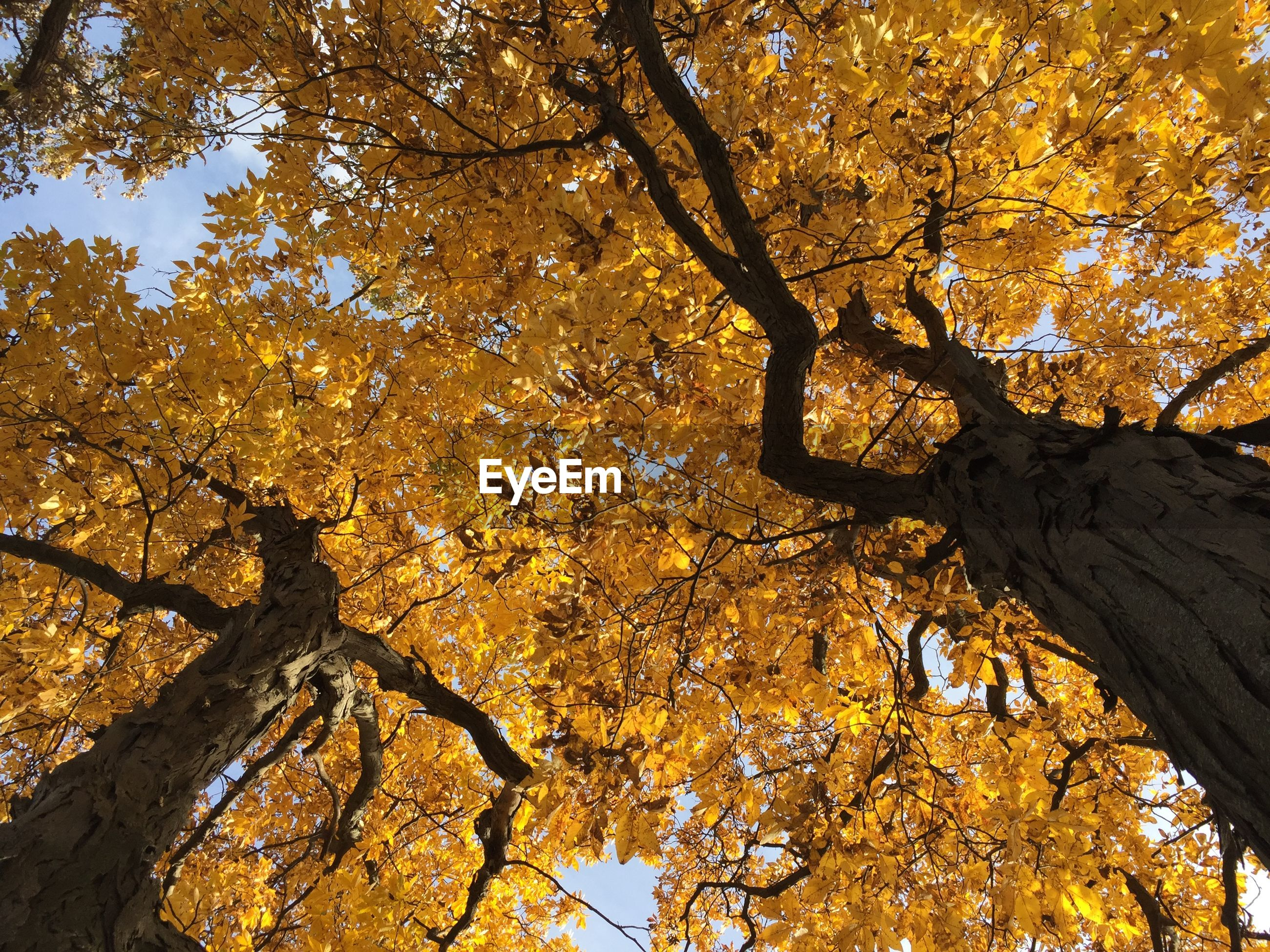 Low angle view of trees growing against sky during autumn
