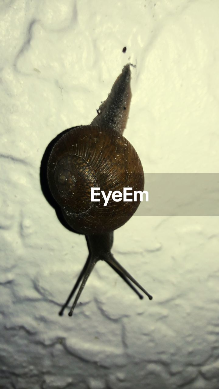 snail, one animal, animal themes, wildlife, gastropod, slimy, animals in the wild, slug, nature, high angle view, close-up, no people, outdoors, fragility, full length, day