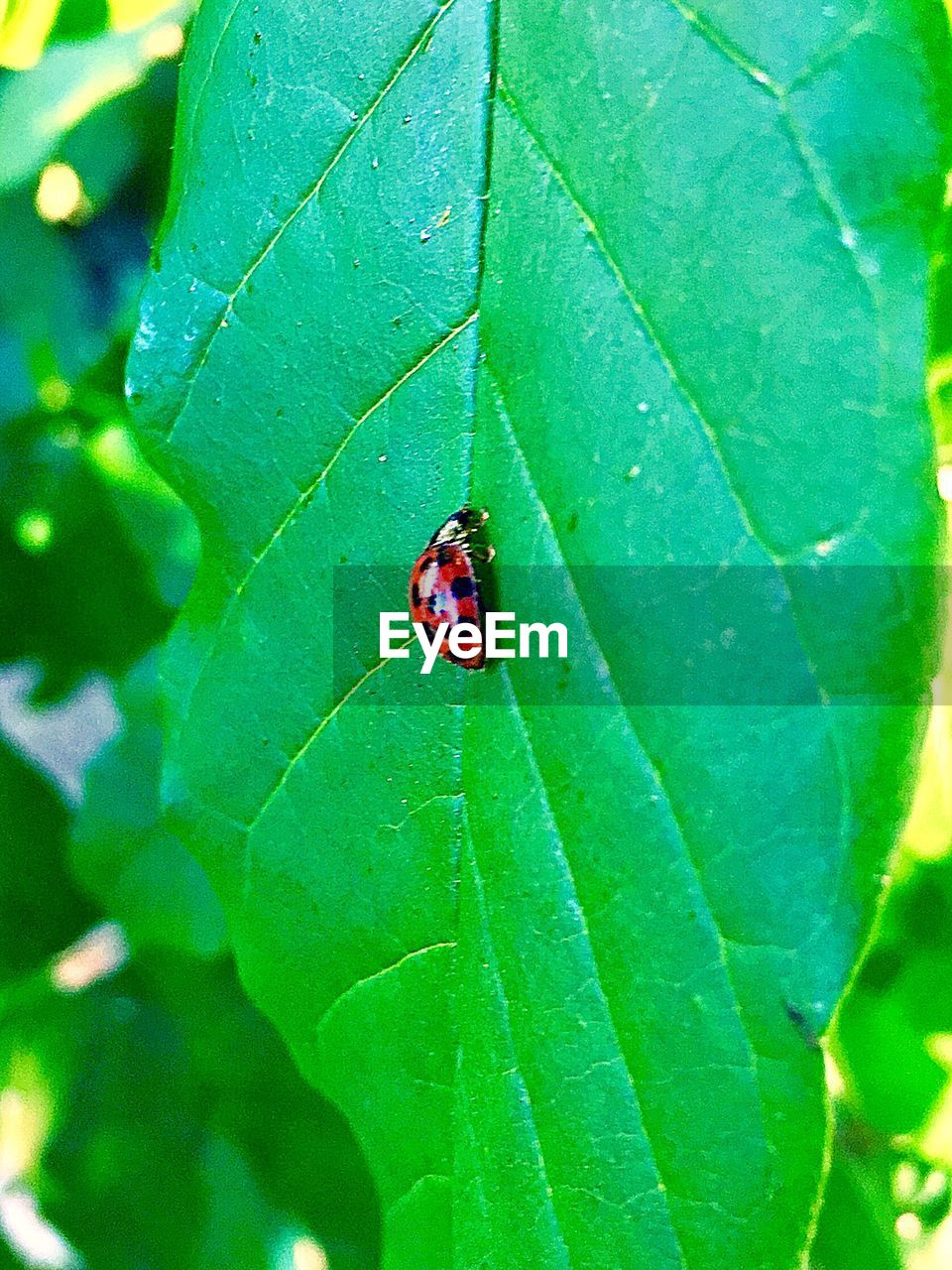 leaf, insect, one animal, animals in the wild, animal themes, wildlife, green color, ladybug, close-up, no people, day, nature, animal wildlife, tiny, outdoors, growth