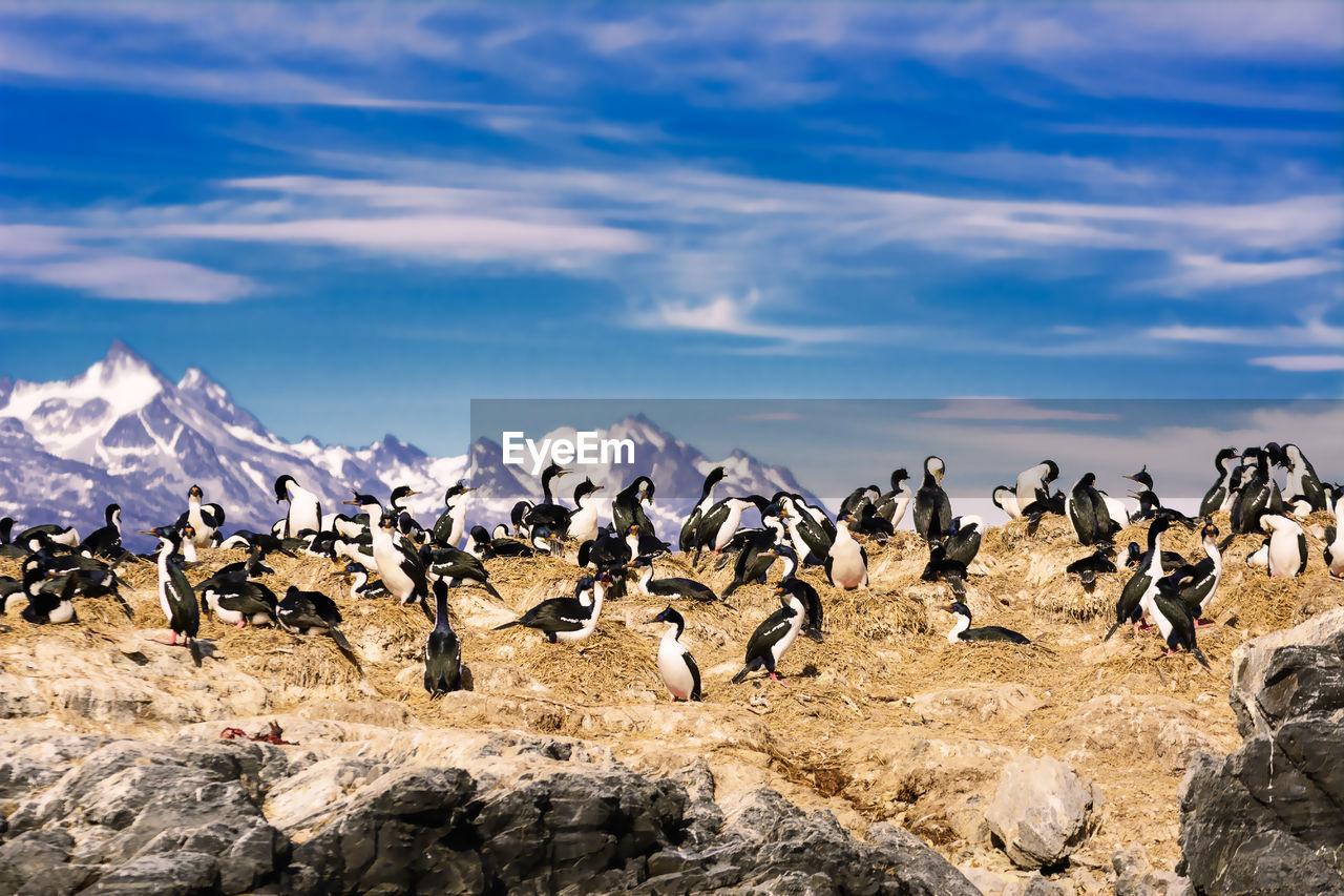 Flock of birds on landscape against sky