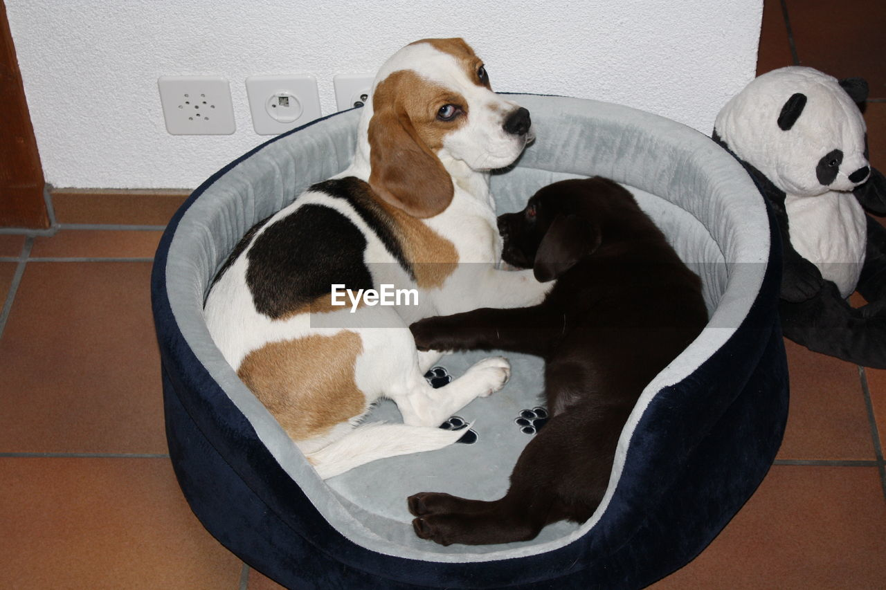 Two cute dogs in a comfortable dog bed indoor