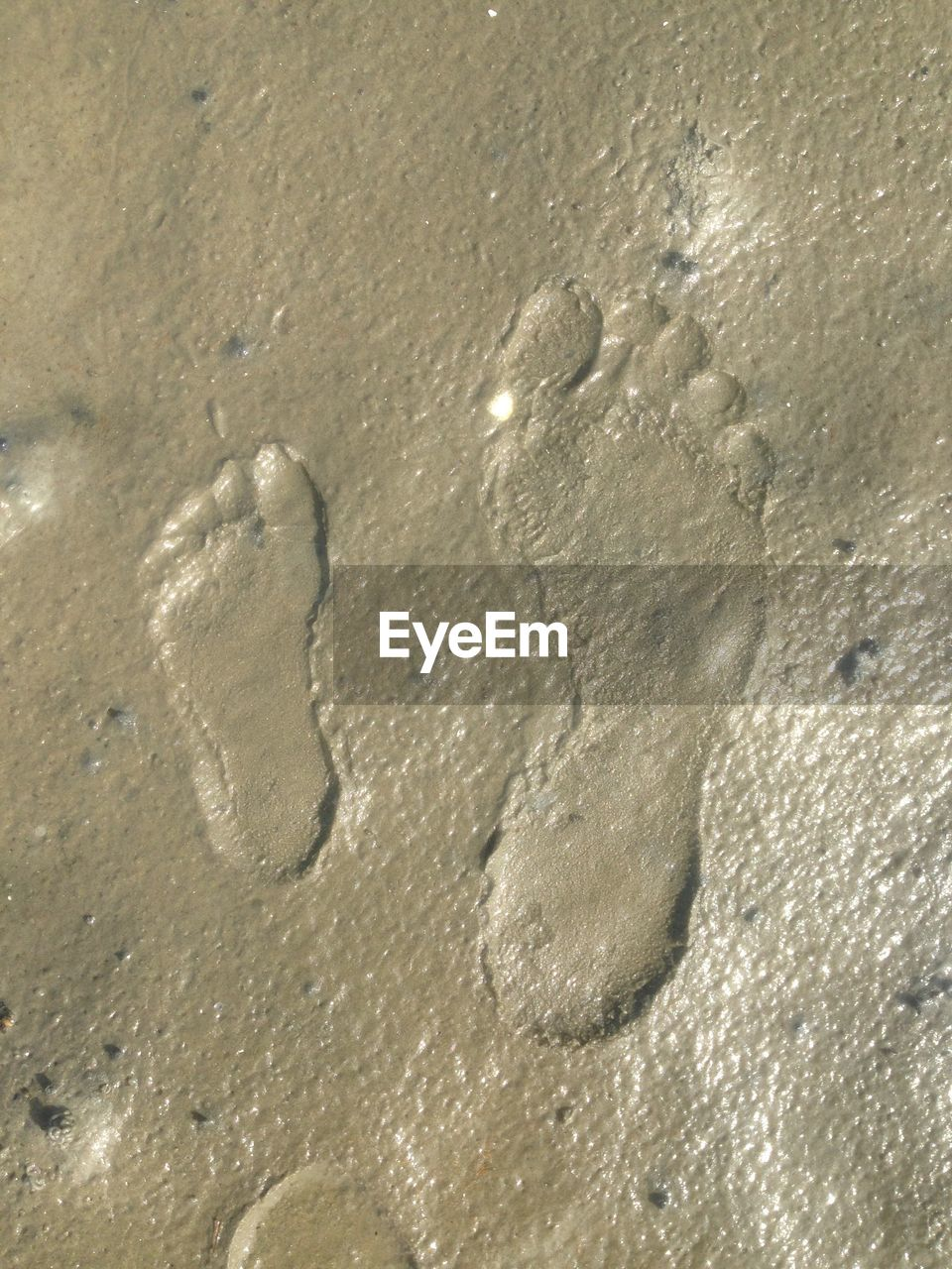 sand, beach, footprint, no people, track - imprint, paw print, high angle view, nature, backgrounds, day, outdoors, close-up, water