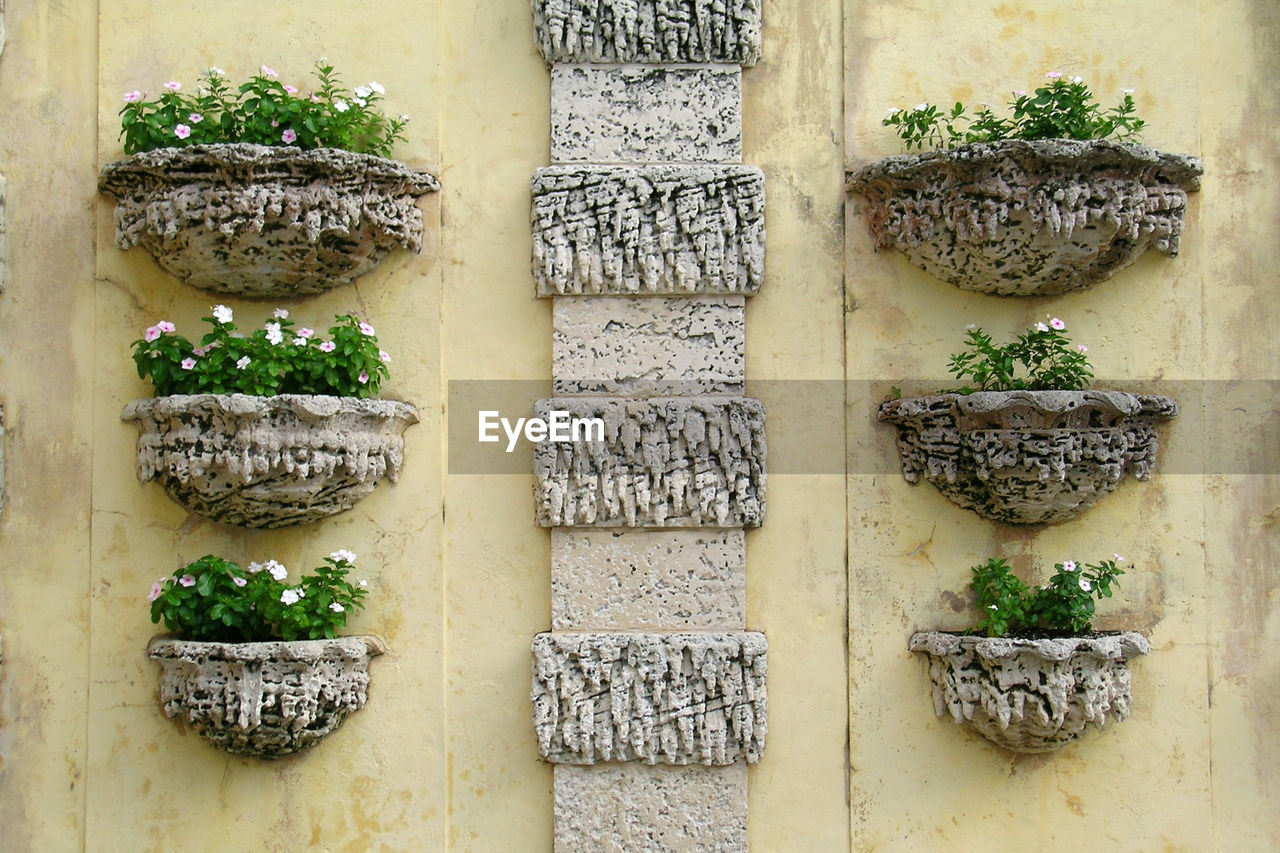 architecture, no people, plant, potted plant, built structure, green color, food, day, building exterior, outdoors, growth, herb, freshness, close-up