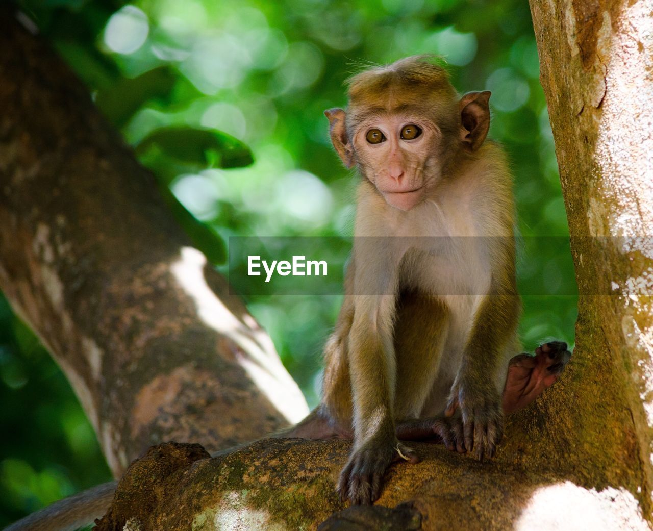 monkey, mammal, animals in the wild, animal themes, animal wildlife, day, no people, outdoors, nature, tree, sitting