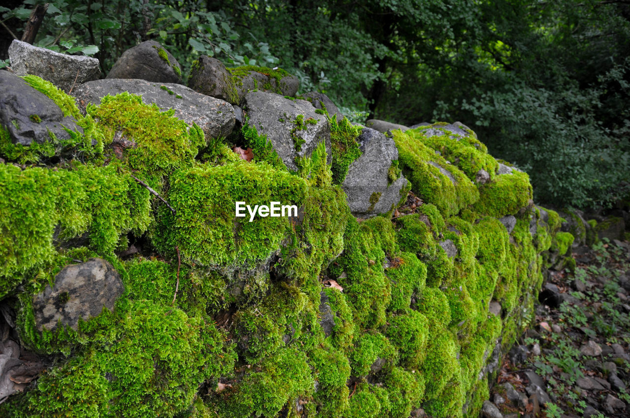 green color, rock - object, moss, nature, no people, plant, outdoors, day, growth, forest, beauty in nature, tree, freshness