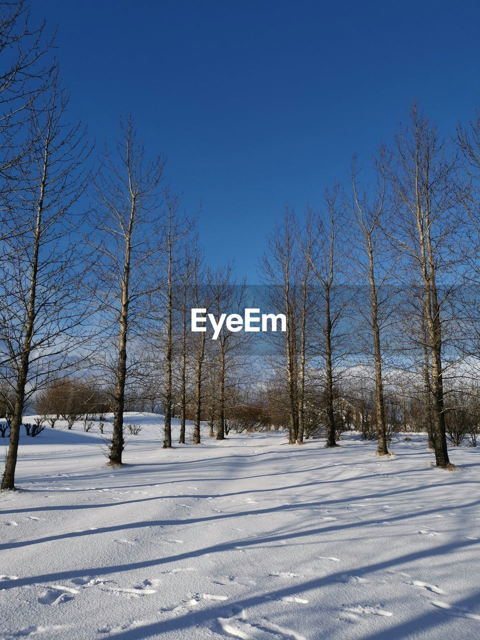 snow, winter, cold temperature, tree, sky, plant, white color, tranquility, beauty in nature, covering, bare tree, land, field, tranquil scene, no people, nature, scenics - nature, day, environment, outdoors