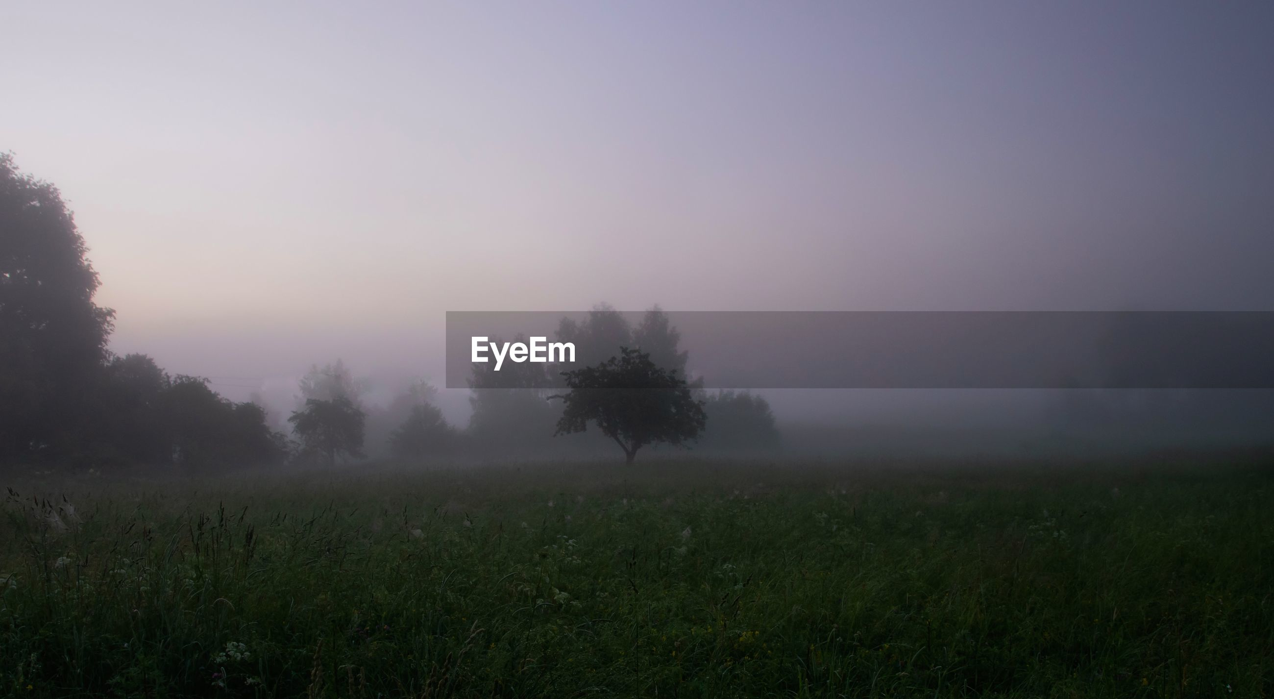 Trees on field against sky during foggy weather