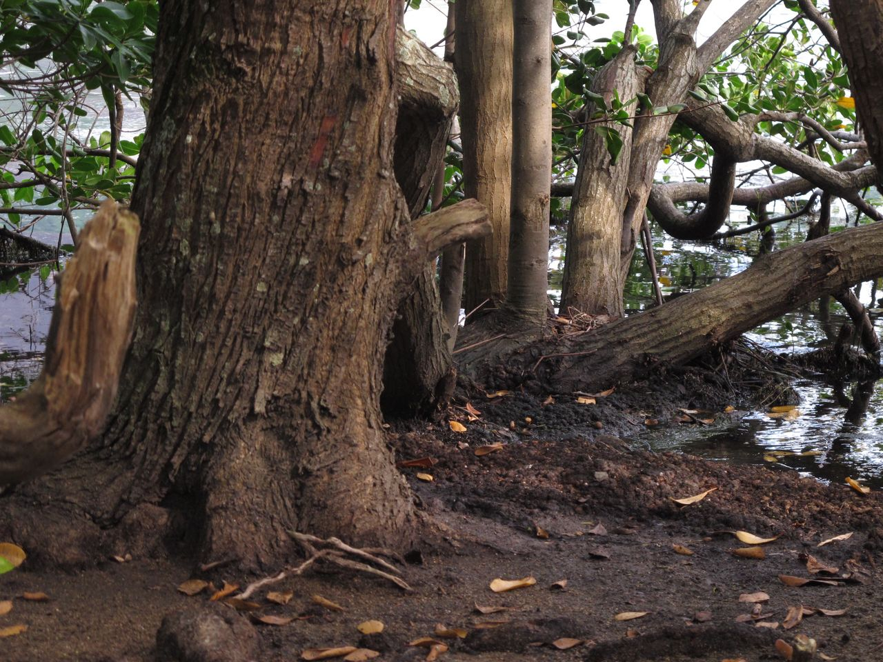 tree trunk, tree, nature, growth, outdoors, forest, branch, no people, day, beauty in nature