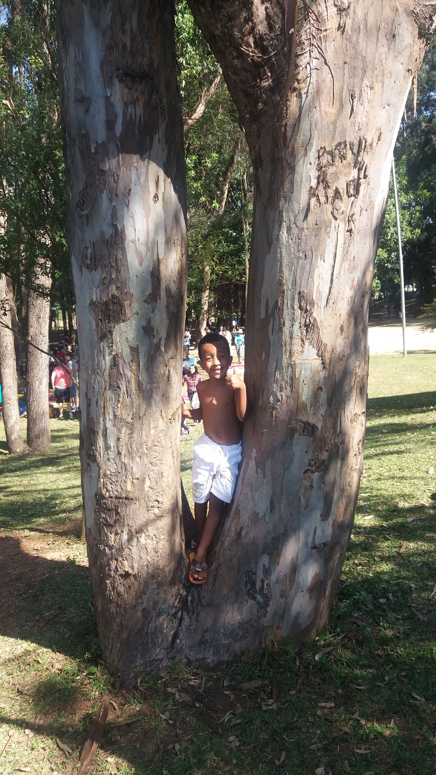 Boy standing amidst tree trunk at park