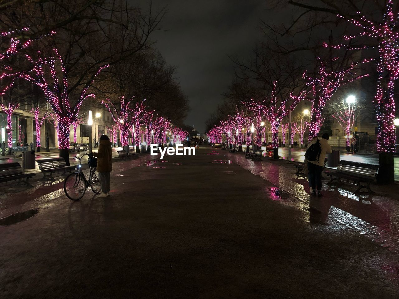 illuminated, tree, night, plant, direction, the way forward, lighting equipment, decoration, diminishing perspective, nature, transportation, no people, architecture, street, city, park, land vehicle, bare tree, footpath, in a row, outdoors, light, treelined