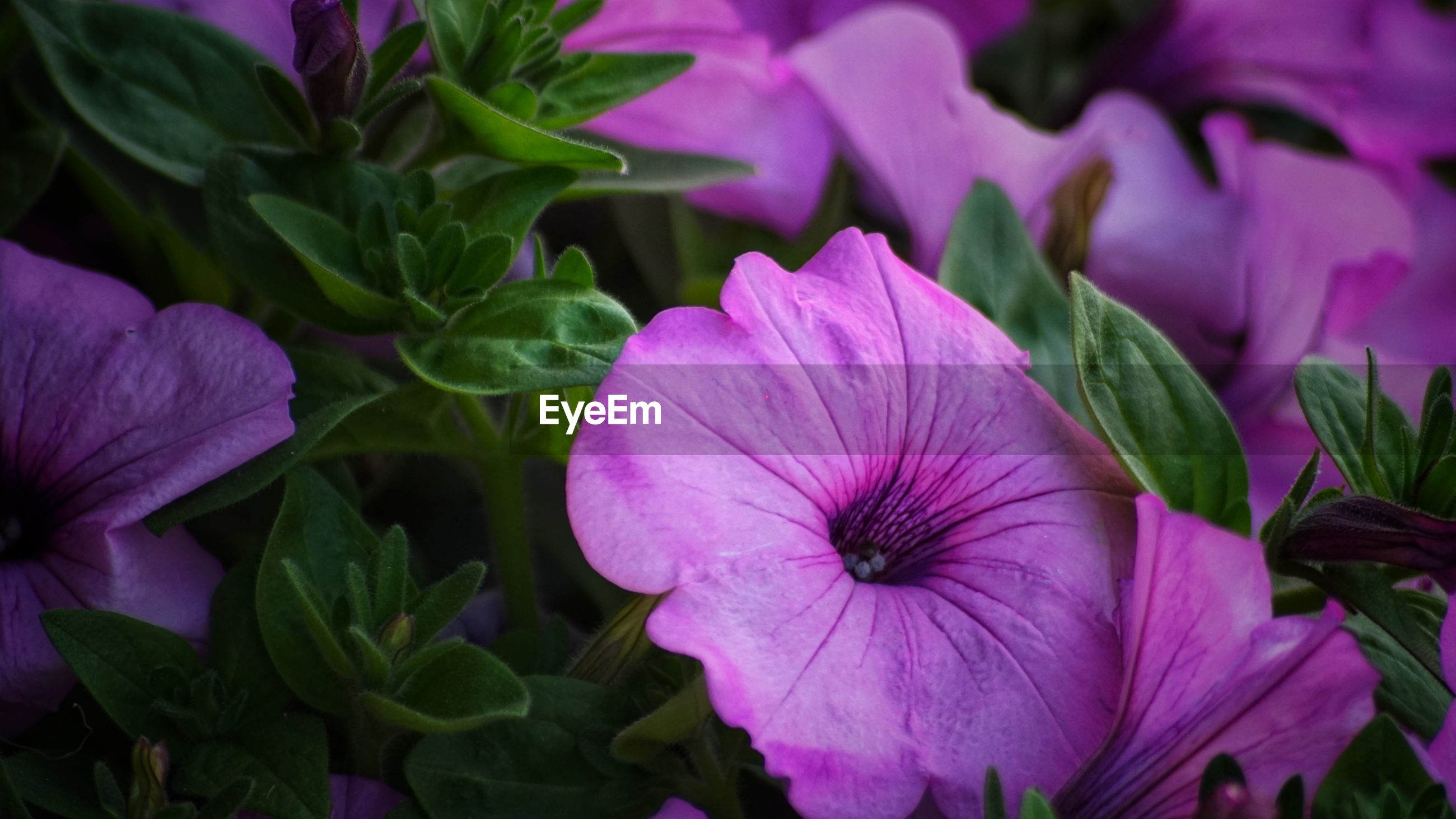 CLOSE-UP OF PINK AND PURPLE FLOWERING PLANTS
