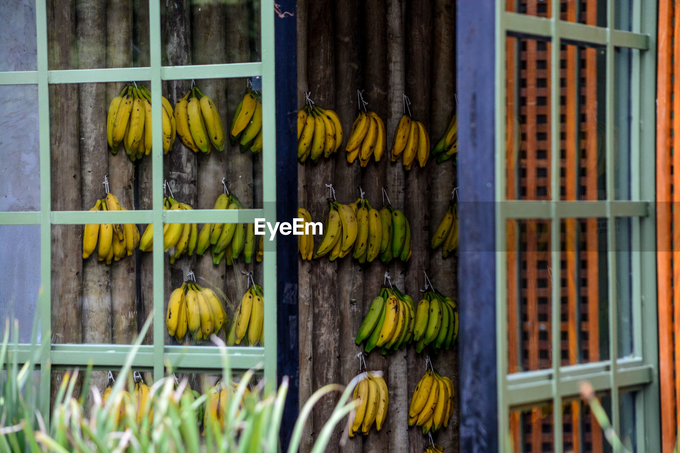 Close-up of window with plants and bananas