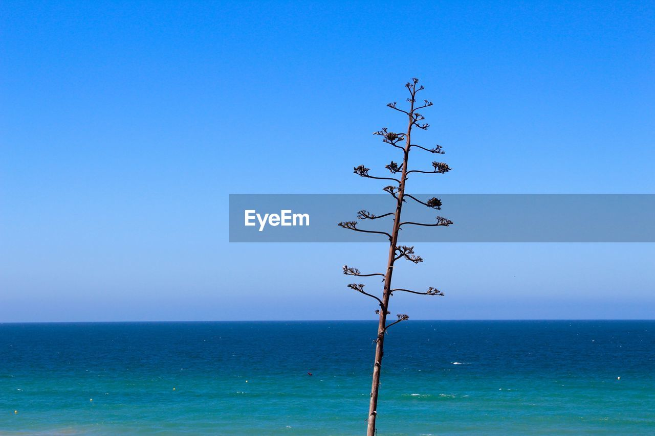 sky, horizon, water, sea, beauty in nature, horizon over water, blue, scenics - nature, tranquility, copy space, clear sky, nature, tranquil scene, day, no people, idyllic, non-urban scene, outdoors, remote, turquoise colored