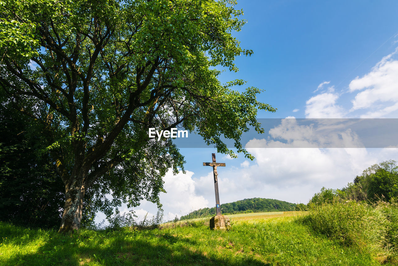 plant, tree, sky, grass, green color, nature, land, growth, field, beauty in nature, day, cloud - sky, landscape, no people, environment, tranquility, tranquil scene, scenics - nature, non-urban scene, outdoors
