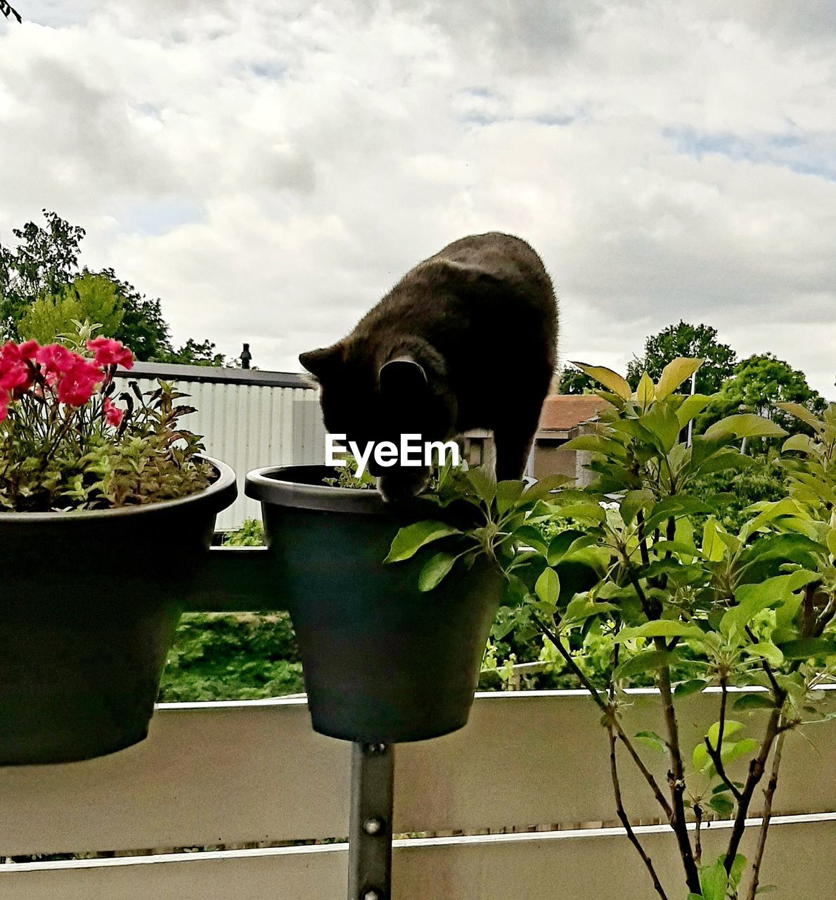 plant, nature, cloud - sky, potted plant, growth, sky, flower, flowering plant, no people, beauty in nature, green color, day, one animal, animal, animal themes, mammal, close-up, leaf, plant part, pets, outdoors, flower pot, flower head