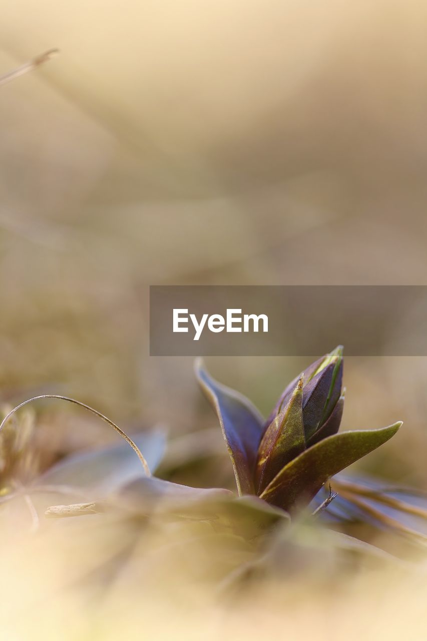 selective focus, plant, plant part, leaf, growth, close-up, beauty in nature, no people, nature, day, vulnerability, fragility, green color, outdoors, tranquility, dry, freshness, leaves, flower, botany