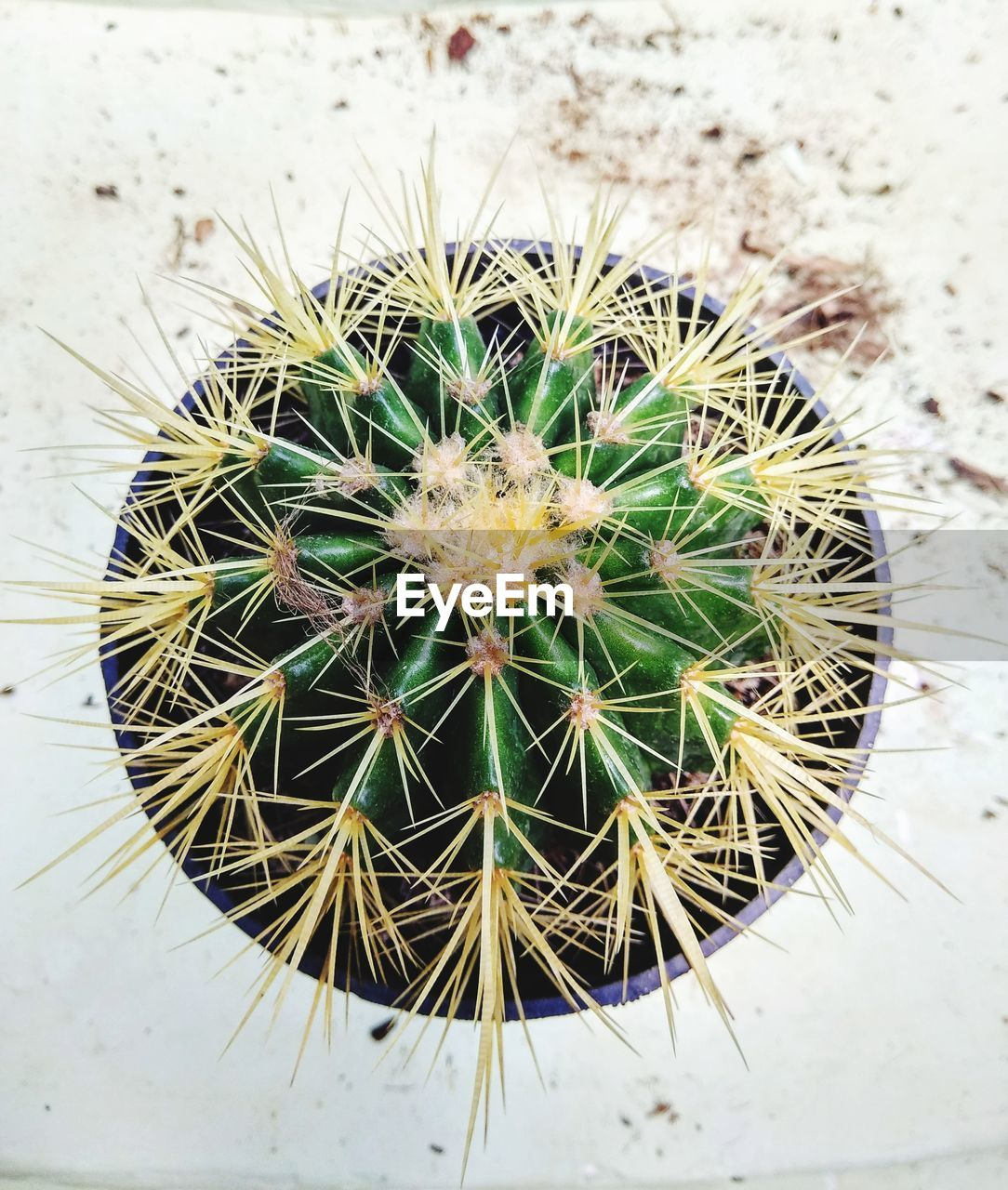 cactus, nature, thorn, growth, spiked, danger, plant, high angle view, green color, close-up, day, no people, directly above, beauty in nature, outdoors, risk