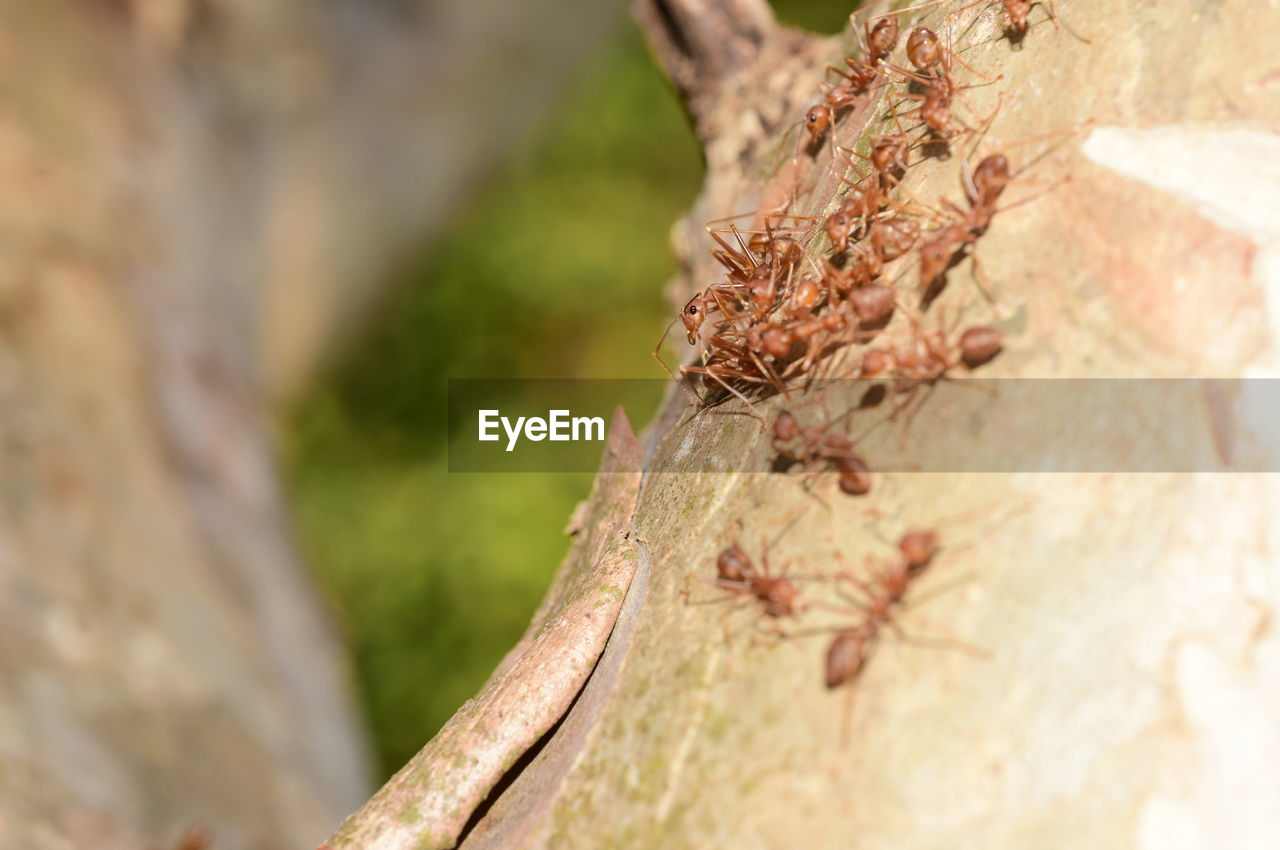 close-up, plant, selective focus, day, tree, no people, nature, focus on foreground, growth, tree trunk, outdoors, trunk, textured, animal wildlife, beauty in nature, rough, branch, plant bark, animal, wood - material, lichen