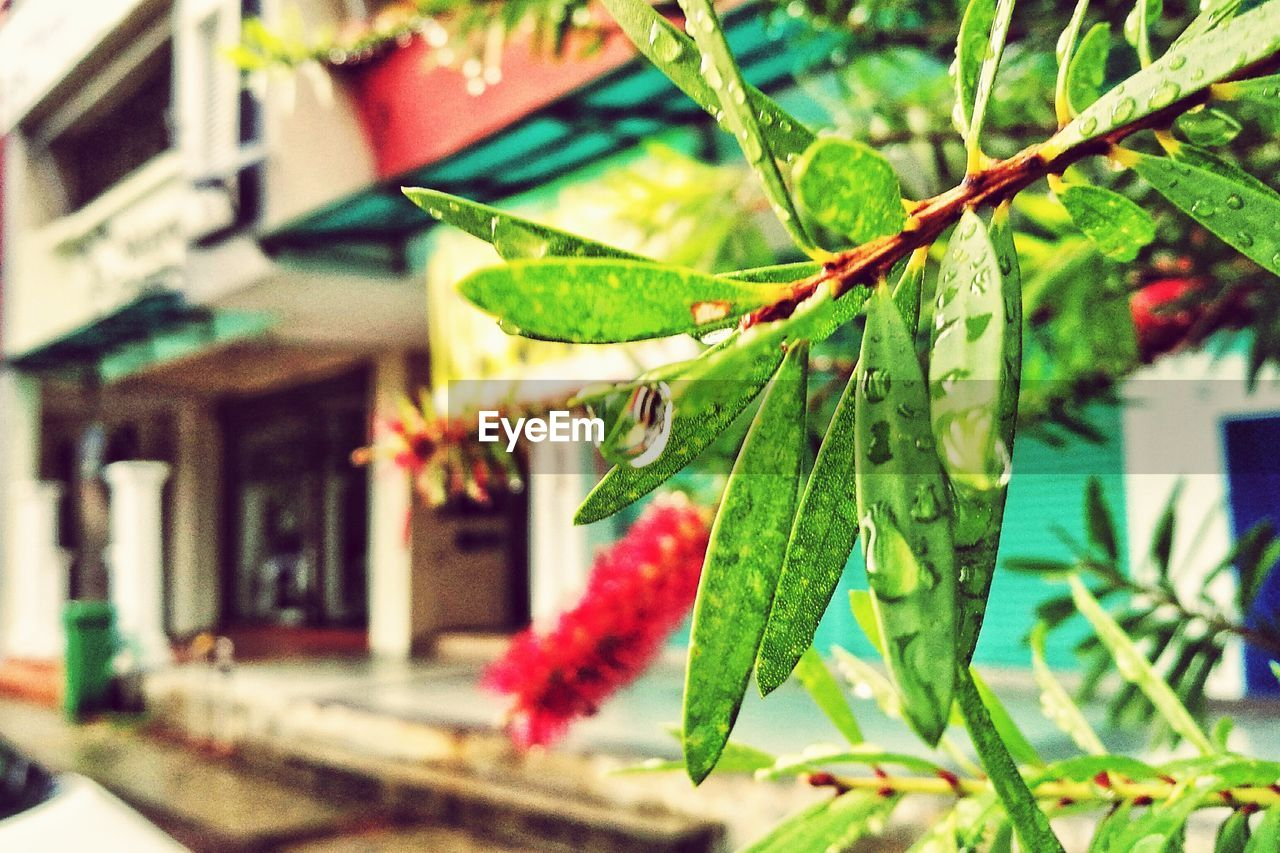 green color, outdoors, focus on foreground, no people, day, close-up, leaf, building exterior, nature, growth, red, built structure, freshness, architecture, beauty in nature, animal themes