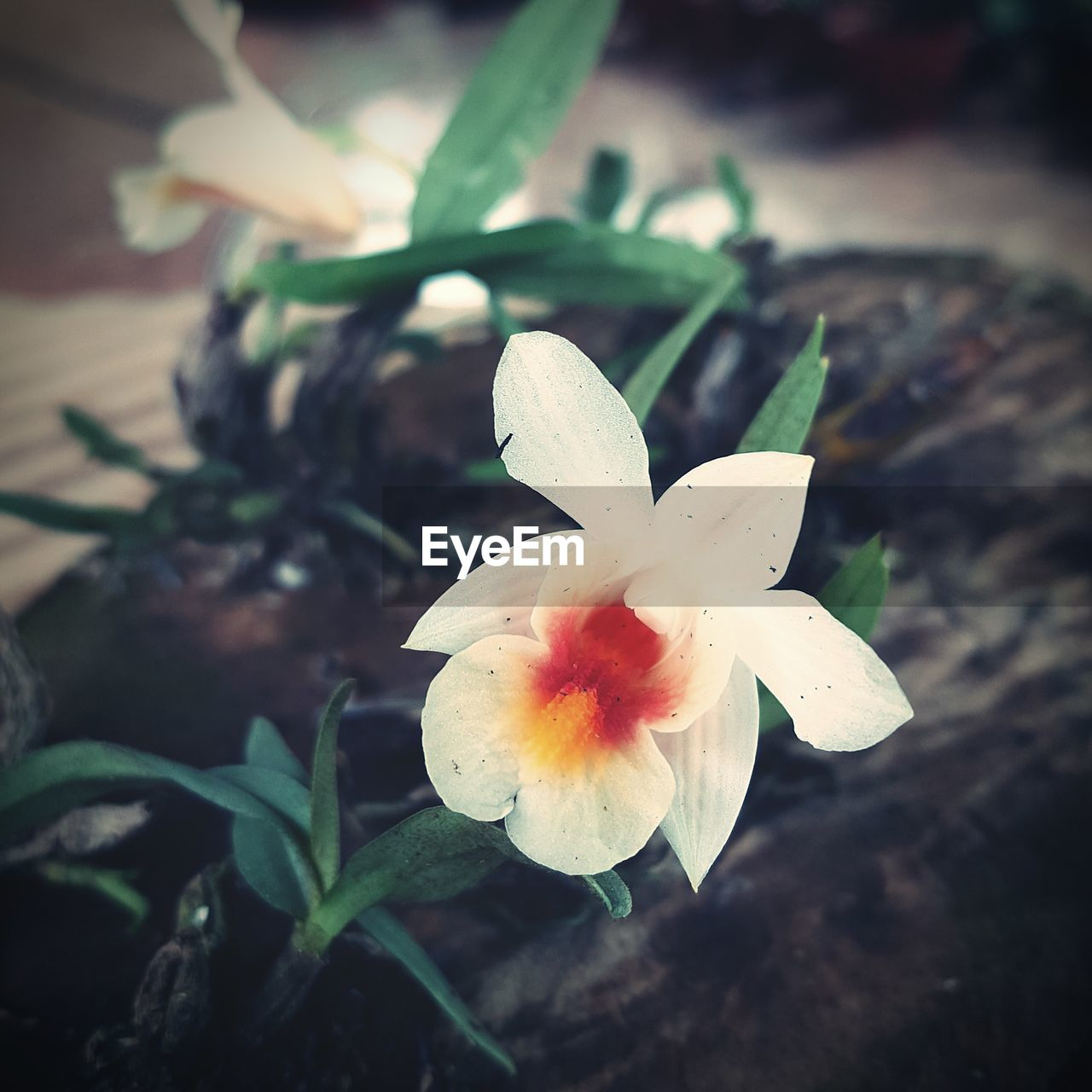 petal, flower, freshness, fragility, flower head, growth, nature, high angle view, close-up, plant, beauty in nature, no people, day, outdoors, leaf, day lily