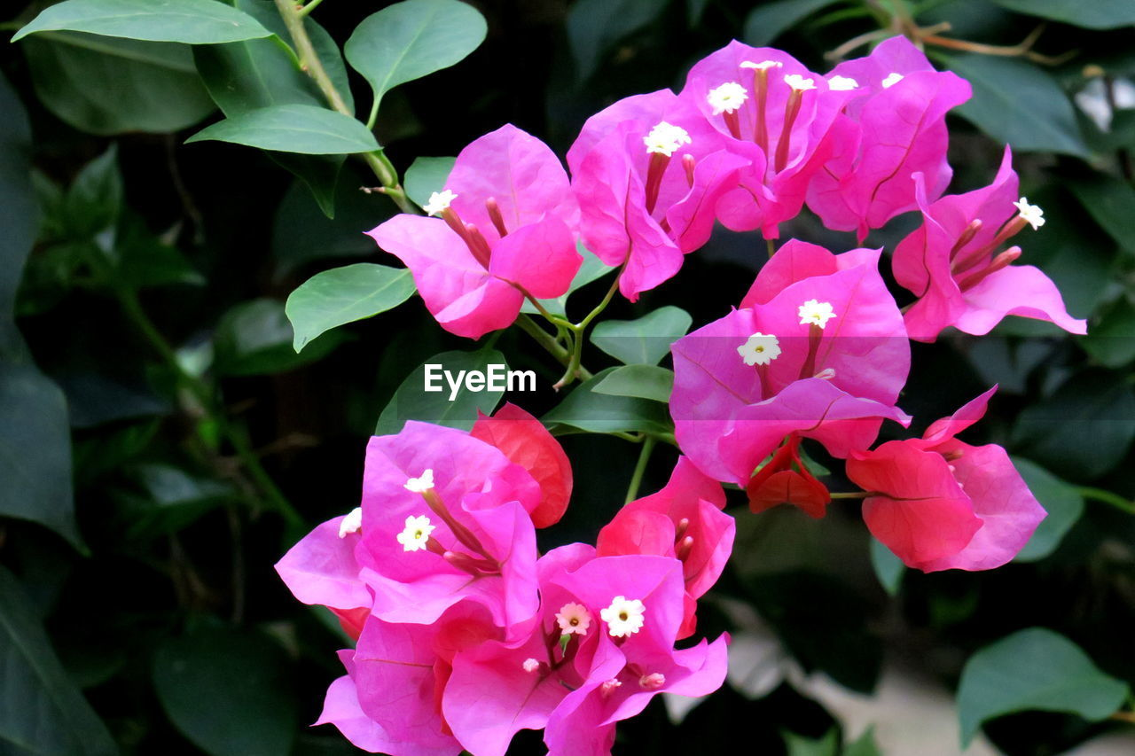 petal, flower, beauty in nature, fragility, nature, growth, plant, no people, flower head, outdoors, pink color, freshness, blooming, day, close-up