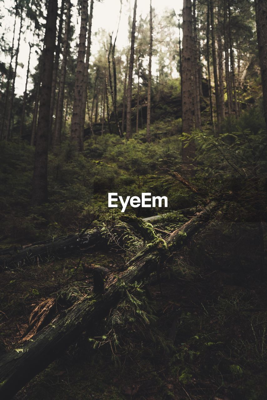 forest, land, tree, plant, trunk, tree trunk, nature, tranquility, growth, woodland, no people, day, tranquil scene, scenics - nature, outdoors, beauty in nature, environment, non-urban scene, landscape, wood - material, rainforest