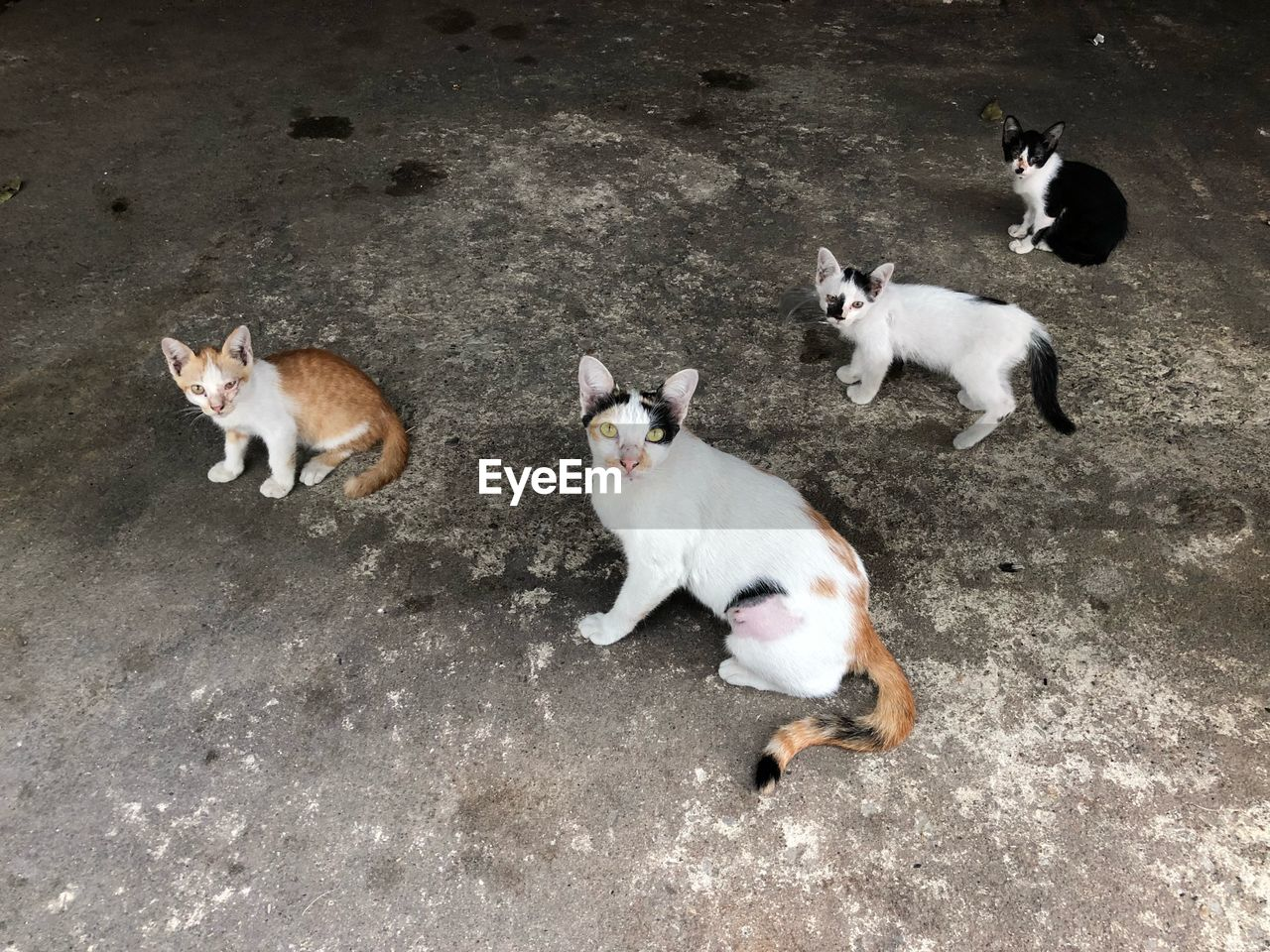animal themes, animal, mammal, group of animals, domestic, domestic animals, pets, cat, domestic cat, feline, high angle view, vertebrate, young animal, two animals, no people, day, nature, dog, canine, animal family