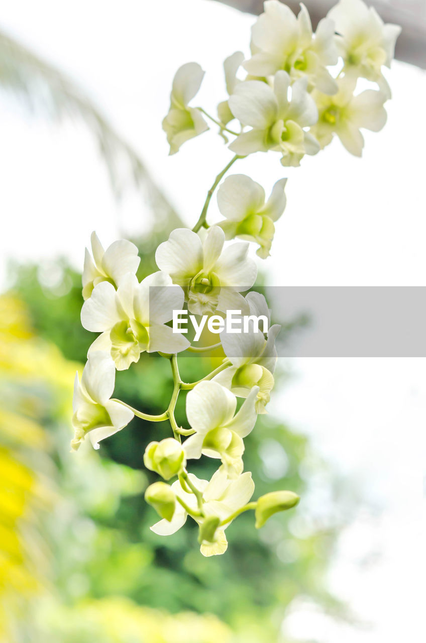 flowering plant, flower, plant, fragility, vulnerability, freshness, beauty in nature, growth, petal, close-up, white color, nature, inflorescence, focus on foreground, day, flower head, no people, selective focus, springtime, plant part, pollen