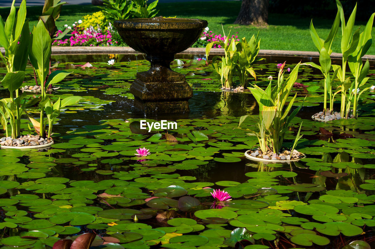 flower, leaf, plant, plant part, water, flowering plant, water lily, pond, green color, floating on water, floating, nature, growth, beauty in nature, freshness, lotus water lily, fragility, vulnerability, no people, outdoors, flower head