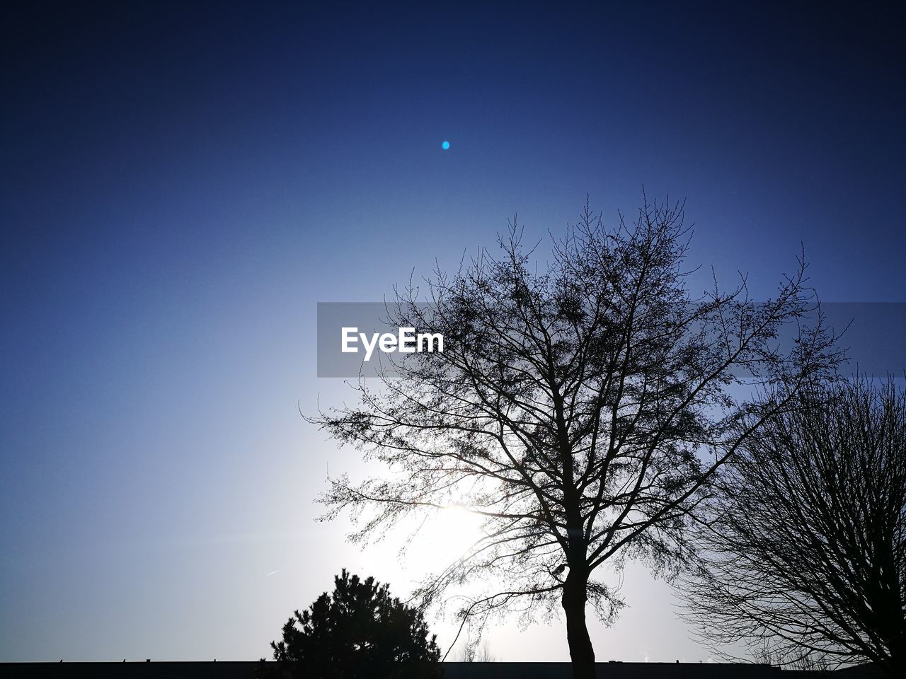 moon, tree, tranquility, bare tree, beauty in nature, nature, clear sky, low angle view, tranquil scene, sky, silhouette, scenics, outdoors, astronomy, blue, branch, half moon, no people, night, crescent