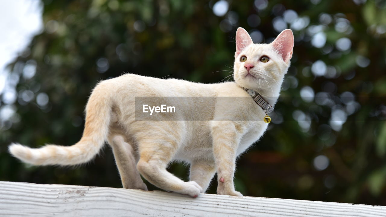 mammal, animal themes, animal, pets, domestic, one animal, domestic animals, vertebrate, cat, feline, domestic cat, focus on foreground, no people, wood - material, looking, day, sitting, whisker, carnivora, nature