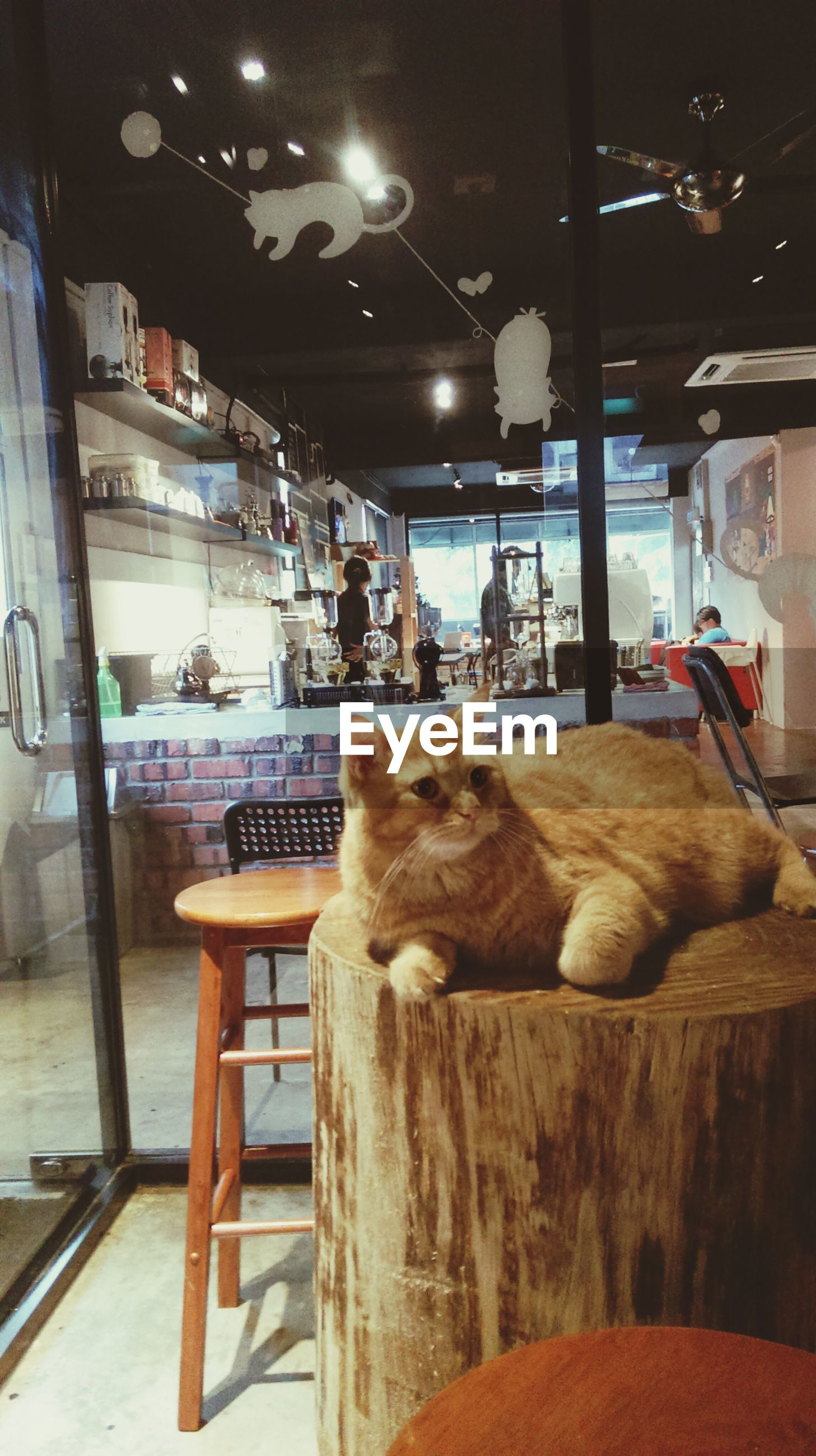 pets, domestic animals, animal themes, indoors, mammal, one animal, sitting, chair, table, domestic cat, relaxation, dog, night, window, illuminated, restaurant, home interior, incidental people, cat, glass - material