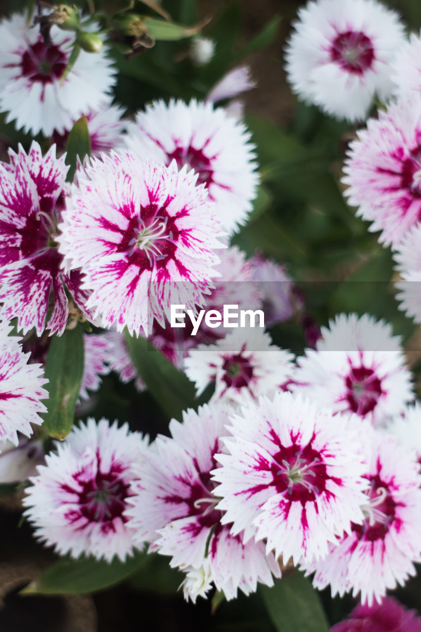 flower, fragility, beauty in nature, petal, nature, plant, flower head, no people, freshness, close-up, growth, pink color, outdoors, day
