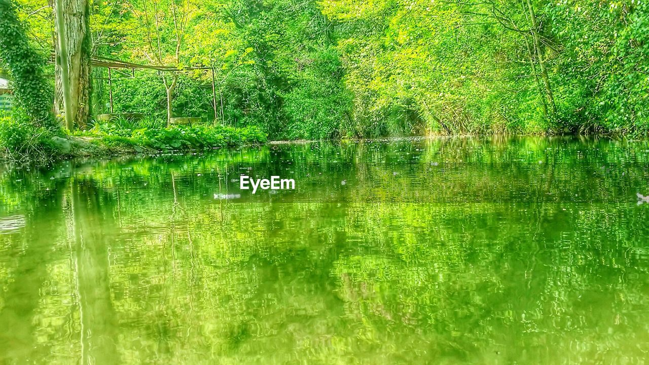 reflection, green color, nature, lake, water, tranquil scene, tranquility, lush foliage, outdoors, standing water, tree, day, beauty in nature, no people, forest, growth, grass, scenics