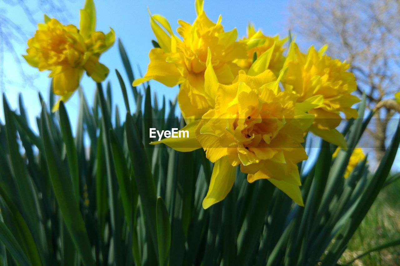 flower, yellow, growth, fragility, nature, beauty in nature, petal, plant, freshness, no people, outdoors, day, close-up, flower head, blooming