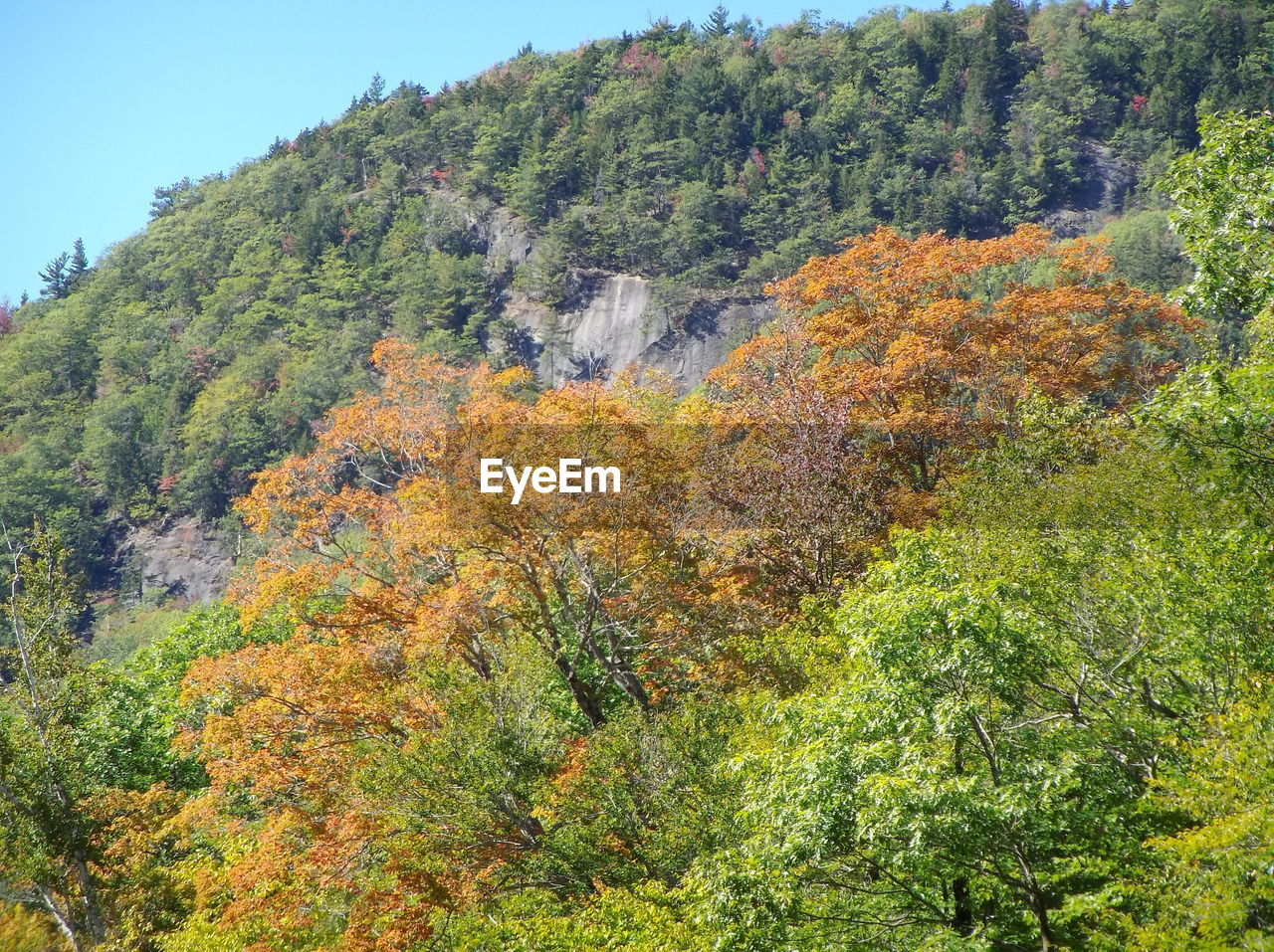 autumn, tree, nature, forest, beauty in nature, vegetation, growth, change, flora, mountain, outdoors, no people, day, sky, range