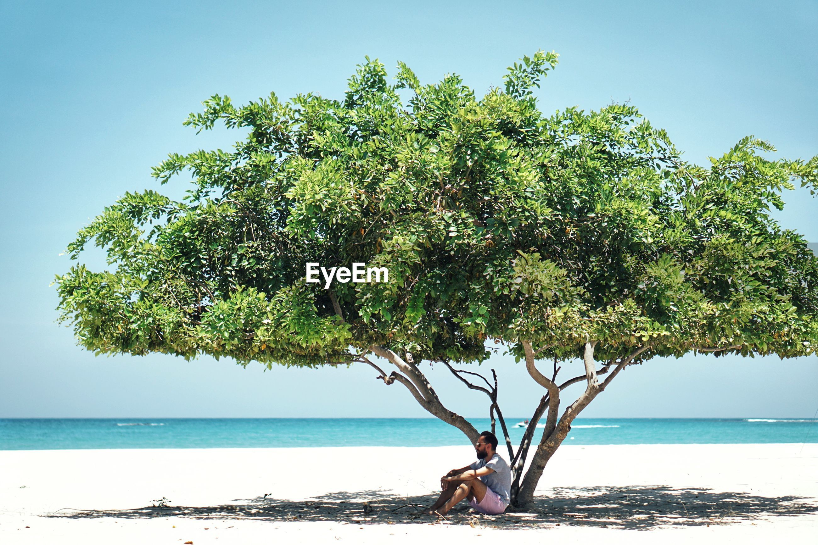 Man sitting by tree at beach