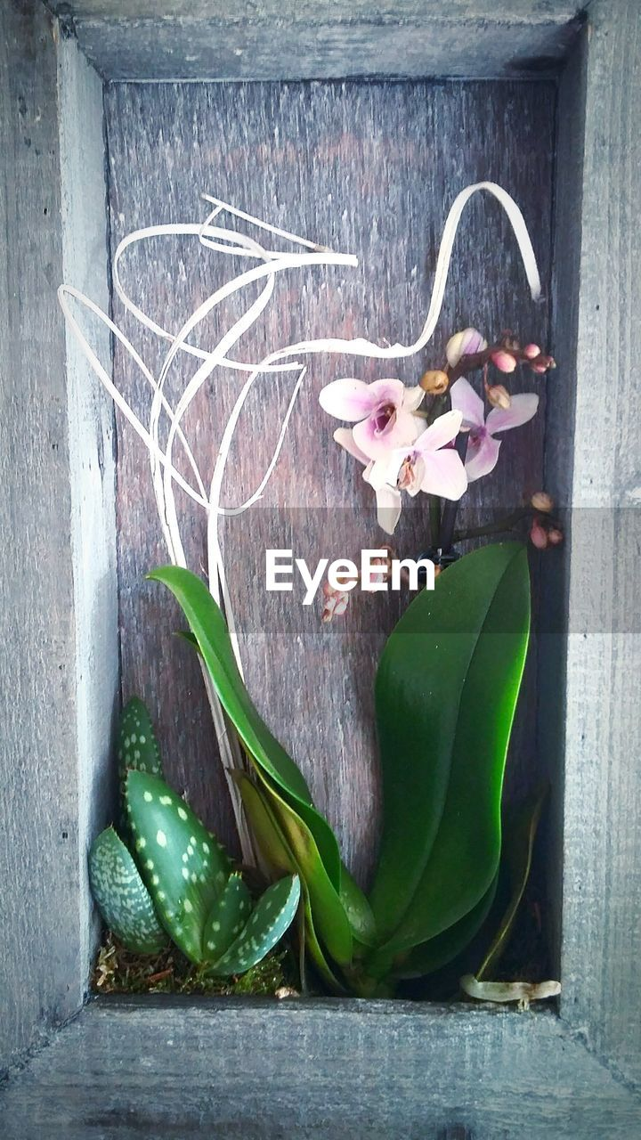 Flower And Cactus Growing In Niche