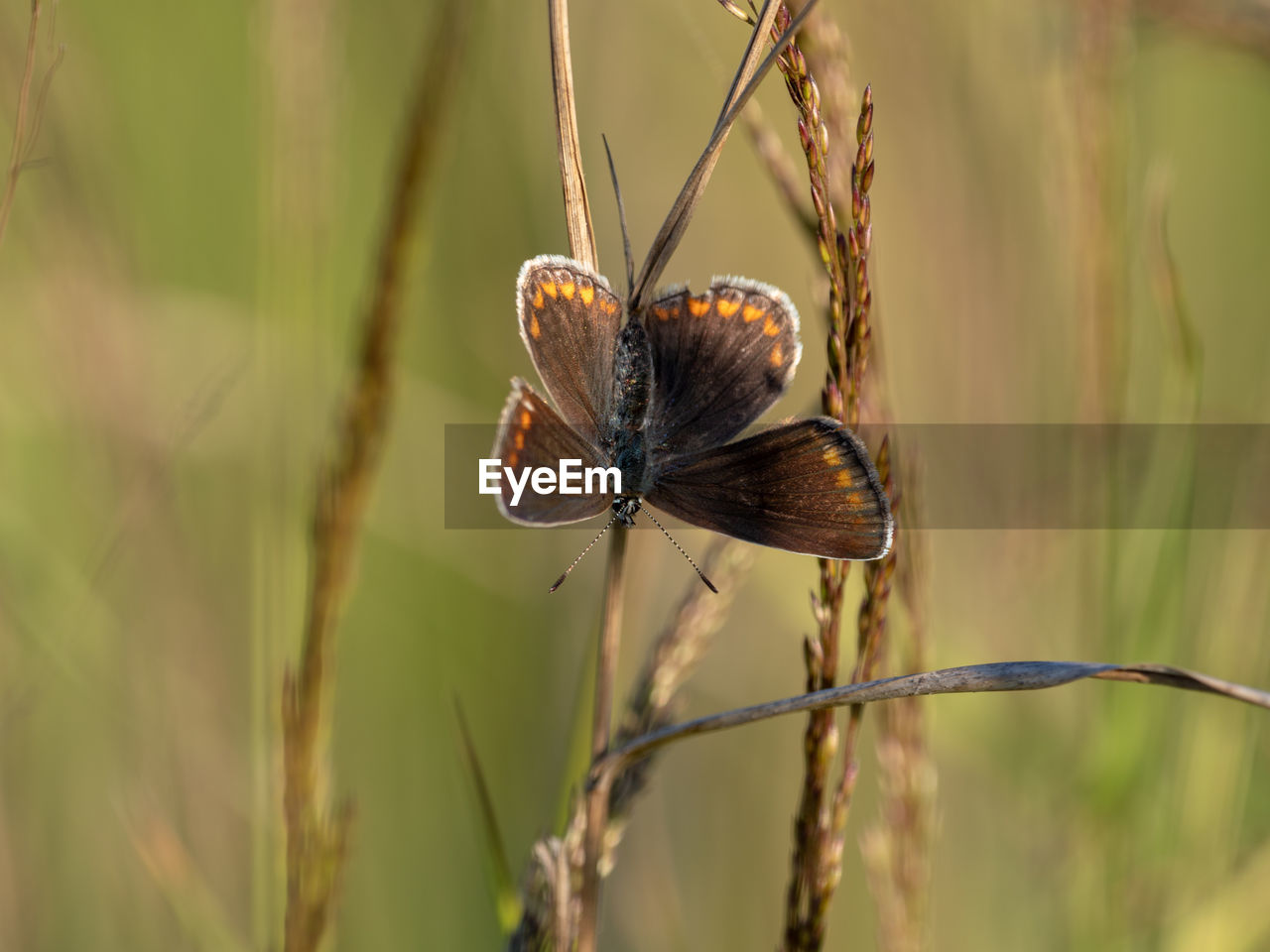 animal wildlife, animals in the wild, invertebrate, animal themes, plant, animal, insect, one animal, close-up, focus on foreground, nature, beauty in nature, animal wing, no people, day, growth, zoology, outdoors, plant stem, selective focus, butterfly - insect, butterfly