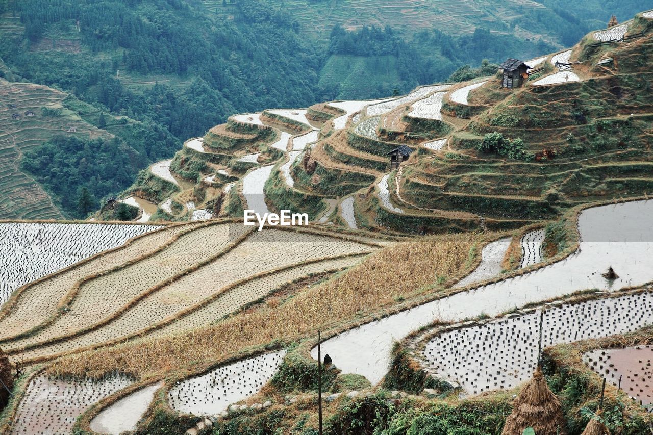 Scenic View Of Rice Fields