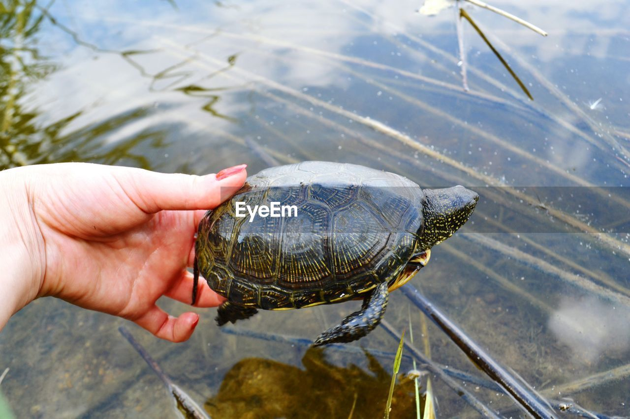 Cropped image of woman hand holding turtle over lake