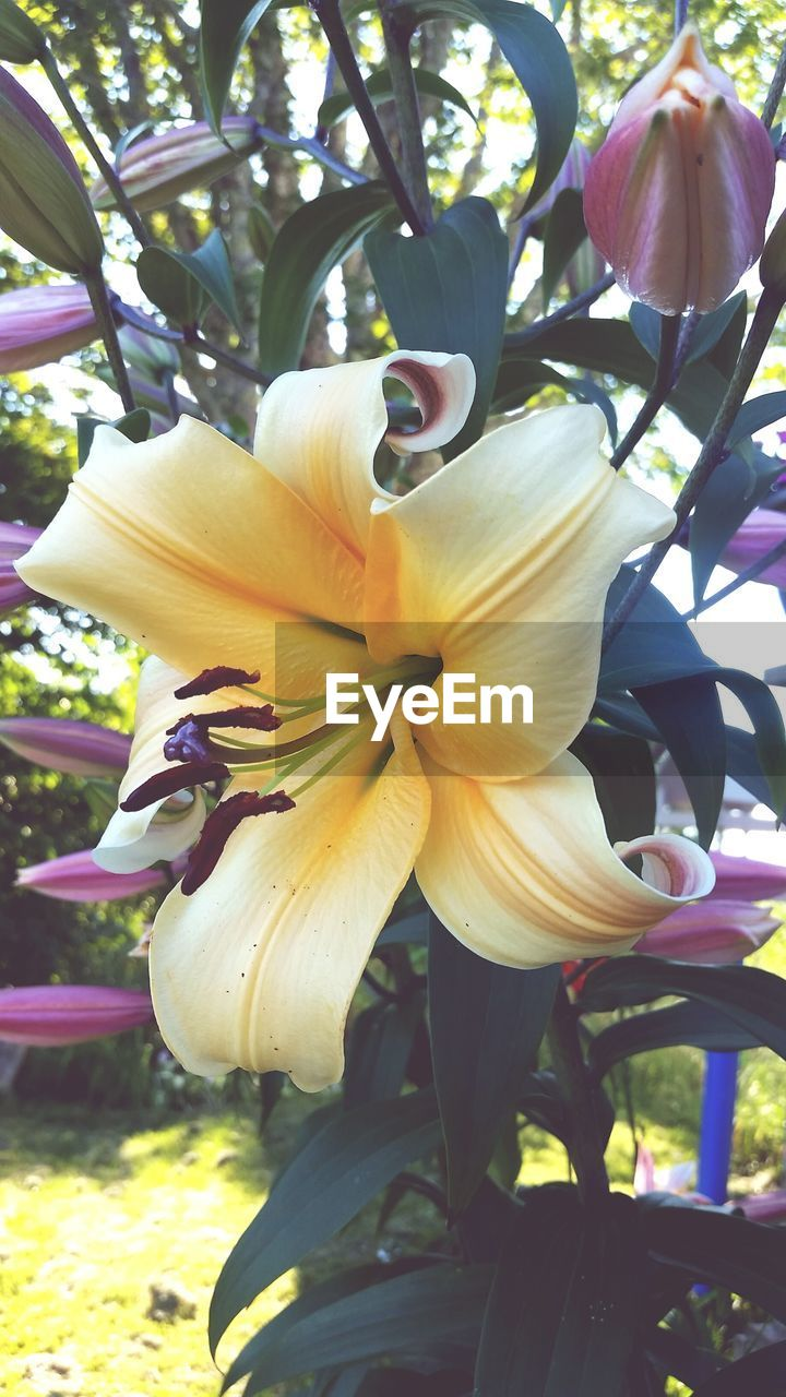 flower, petal, fragility, beauty in nature, growth, nature, flower head, freshness, day, close-up, yellow, outdoors, no people, tree, blooming, springtime, day lily