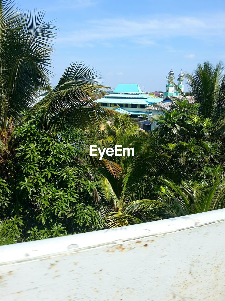growth, palm tree, plant, nature, green color, day, outdoors, sky, no people, beauty in nature, tree