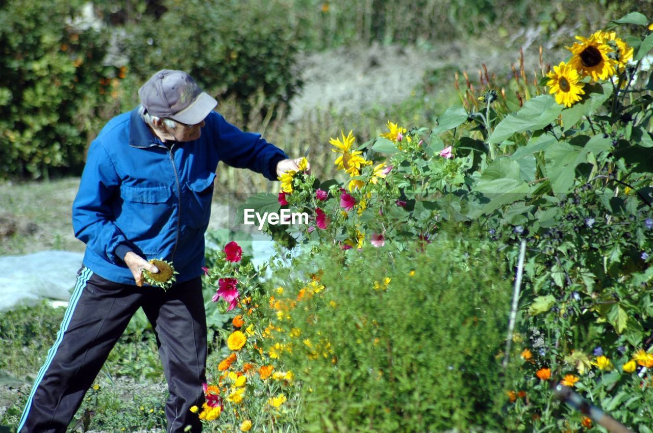 flower, plant, flowerbed, nature, adult, outdoors, adults only, one person, people, day, protective glove, growth, yellow, fragility, horticulture, poppy, beauty in nature, herbal medicine, flower head, one man only, freshness, only men