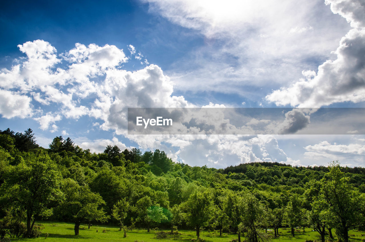 plant, tree, cloud - sky, sky, green color, beauty in nature, tranquil scene, tranquility, day, scenics - nature, growth, nature, landscape, land, environment, no people, non-urban scene, field, grass, outdoors