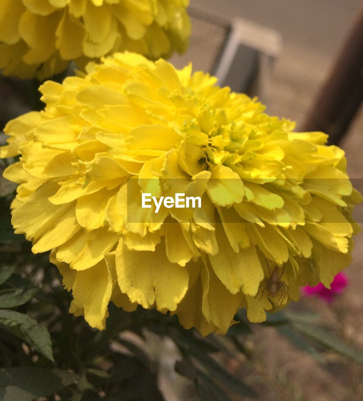 flower, yellow, fragility, freshness, petal, beauty in nature, flower head, nature, close-up, growth, botany, outdoors, plant, focus on foreground, day, springtime, no people, blooming